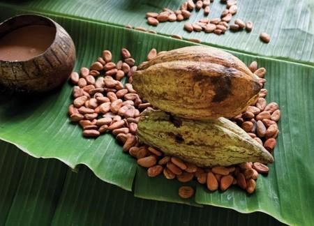 Cacao Grijalva