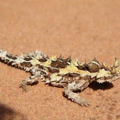 Foto 17 de 22 de la galería colores-del-gran-desierto-de-victoria en Xataka Ciencia