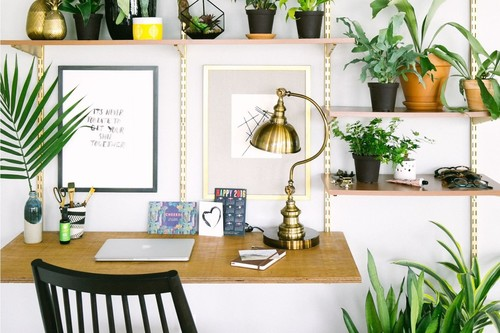 Estas nueve plantas son la tendencia en decoración que obsesionan a todo Pinterest este 2019