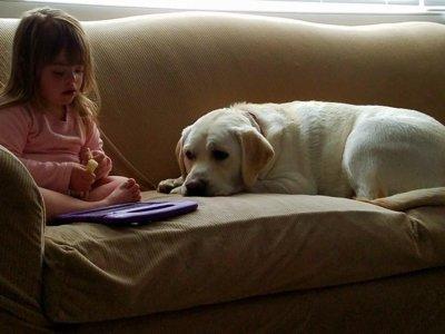 El perro de una niña diabética y con Síndrome de Down detectó una caída de sus niveles de azúcar a 8 km de distancia