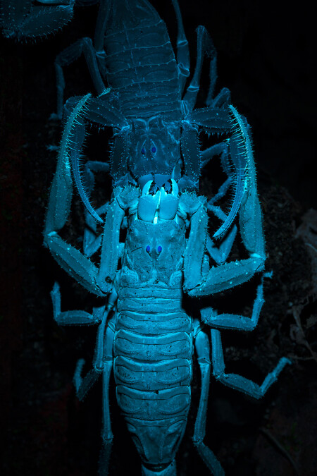 C Roberto Garcia Roa Glowing Mating Cupoty