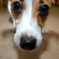 Lo que ven los perros cuando miran la televisión