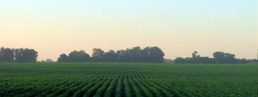 En 2030, por fin, acabaremos con la agricultura y la ganadería y tendremos comida más nutritiva y más sabrosa