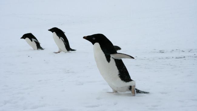 Linux sigue creciendo: Su Kernel implementará un millón de nuevas líneas de código