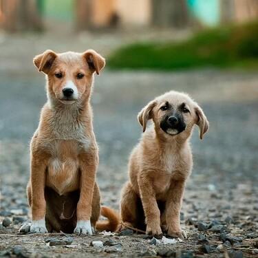 Pide una pizza y adopta un perro: la bonita campaña benéfica en Hungría para encontrar hogar a mascotas abandonadas