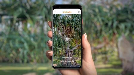 """No se dice """"árbol"""", se dice """"tullei"""": esta app de Google usa la cámara del móvil para traducir lo que vemos a lenguas indígenas"""