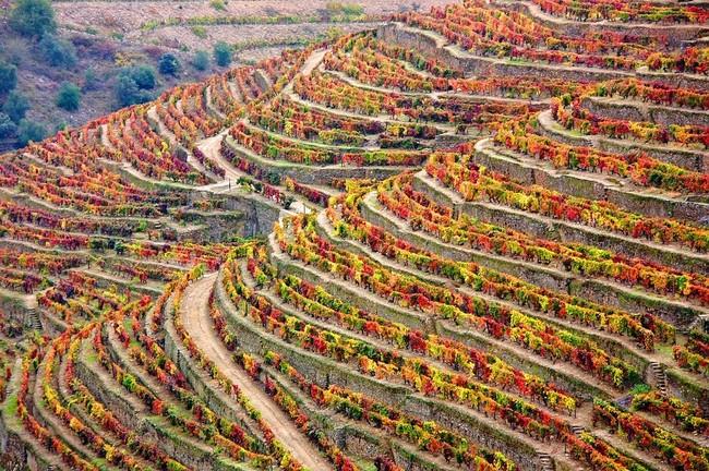 Winery 1357947 960 720
