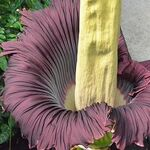 Estas son las plantas que más calor generan en el mundo, una propiedad muy rara en la flora
