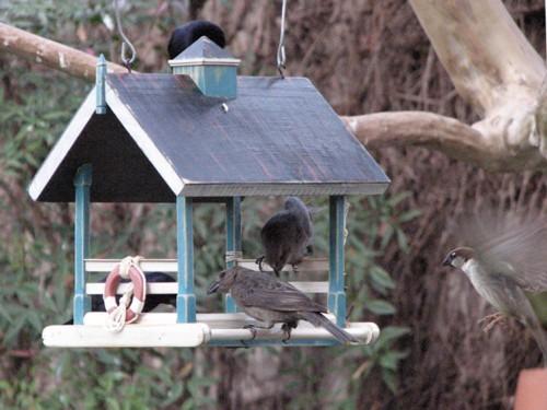 Foto de Vrubel, encantadoras casas de pájaros con encanto (3/6)