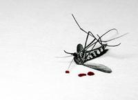 Un mosquito puede arruinar tu viaje