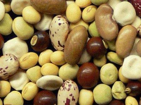 Las legumbres en la alimentación infantil