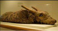 Nuevo descubrimiento de 83 momias de animales en Egipto