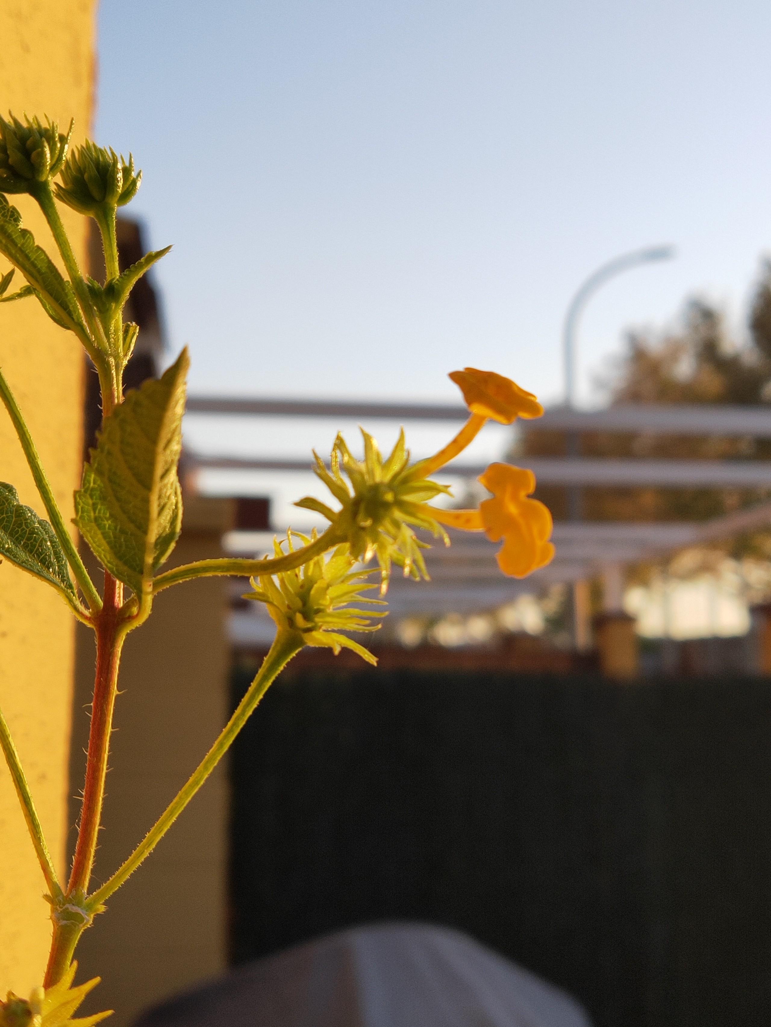 Foto de Fotografías tomadas con el OPPO Find X (9/12)