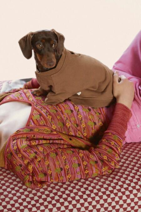Zara Mascotas 08