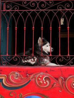 perro tras las rejas javiercit0 2