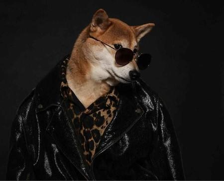En El Nuevo Ano Chino Dedicado Al Perro Recordamos Los Mejores Looks De Nuestro Favorito Mensweardog 11