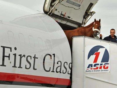 En esta aerolínea sólo viajarás si eres un caballo