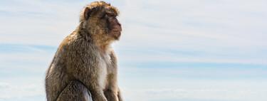 El desafío de los límites morales en el caso de los 132 embriones de células humanas y de mono: órganos humanos a cambio de más experimentos con animales