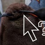 Las seis distribuciones Linux más peculiares de 2020