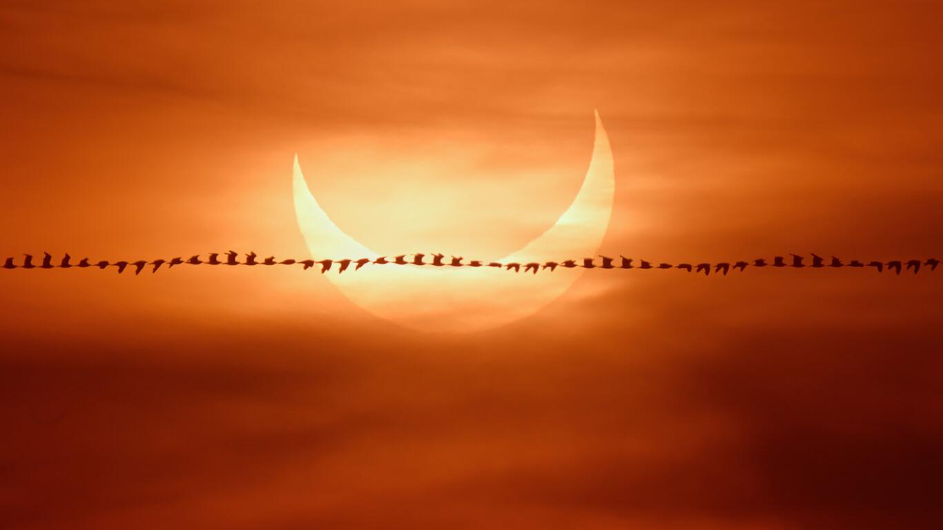 Así se hizo la foto de una gaviota que pasa volando por delante del espectacular eclipse solar y que ha sido destacada por la NASA