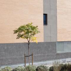 Foto 10 de 49 de la galería milvus-35 en Xataka Foto