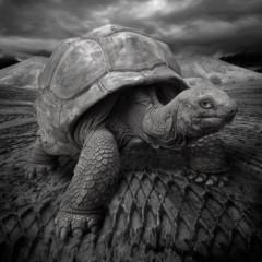 Foto 8 de 12 de la galería la-belleza-animal-en-blanco-y-negro en Xataka Foto