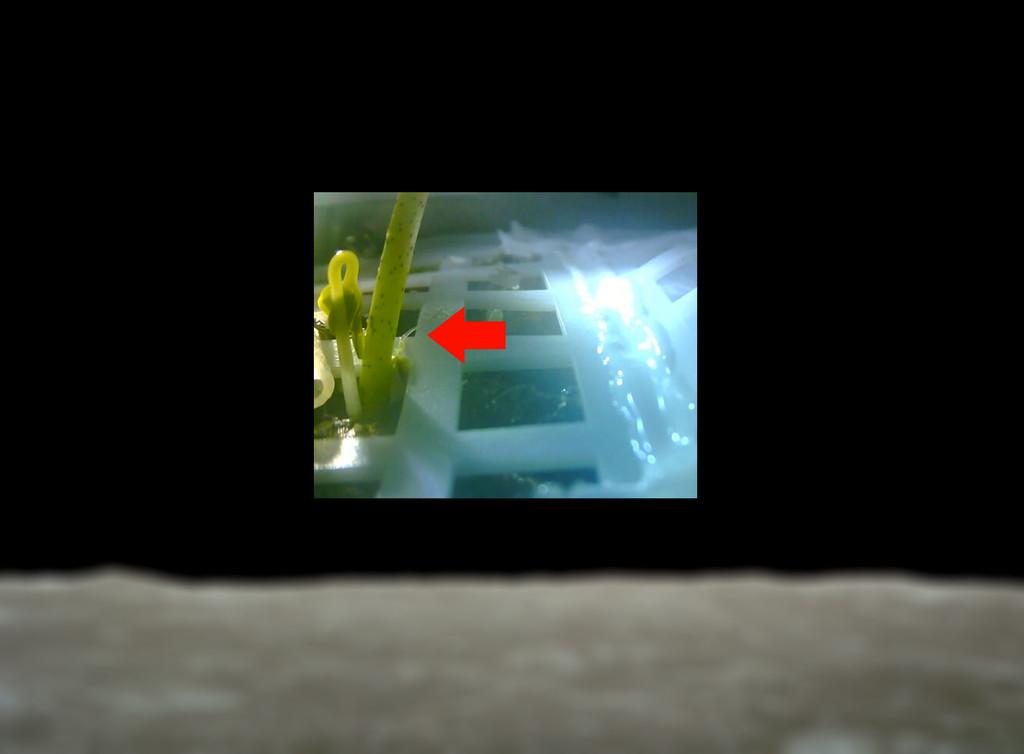 China ha conseguido que una semilla germine por primera vez sobre otro mundo en su misión Chang'e 4