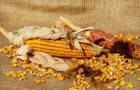 Semillas En Mexico Como Una Semilla Nativa Da Estabilidad A Alimentacion