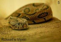 Top 5. Serpientes más venenosas