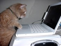 MacBooks con trackpad... ¿de cristal?
