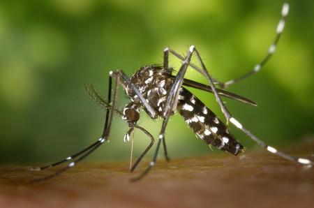 """El Zika ya no es una """"emergencia sanitaria global"""": la OMS levanta la alarma, pero la amenaza sigue muy viva"""