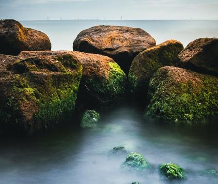 """Ladrones de genes: las algas roban """"características"""" a las bacterias oceánicas, y lo hacen para sobrevivir"""