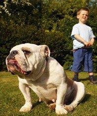 Los perros grandes son peligrosos para los niños pequeños