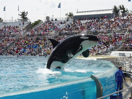 Orca Maltrato Animal