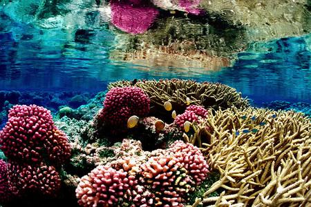Los grandes arrecifes de coral protegieron la diversidad marina