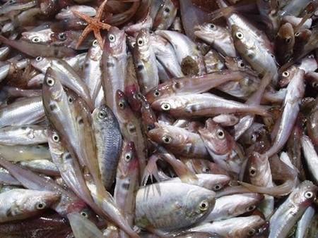 Se produce una caída promedio del 4 por ciento en las capturas pesqueras debido al calentamiento global