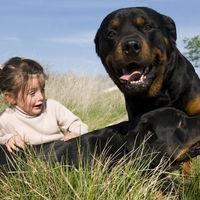 Las impactantes imágenes de una madre defendiendo a su hijo del ataque de unos perros