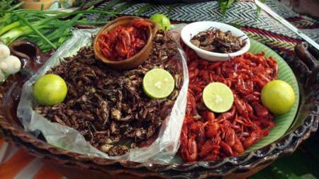 Para Tacos Insectos Edo Mex