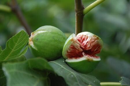 Frutas de temporada: higos, consejos para poder conservarlos frescos por más tiempo y sus beneficios a la salud