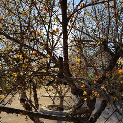 Foto 31 de 54 de la galería xiaomi-mi-9-fotografias en Xataka