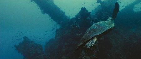 oceanos24png.jpg