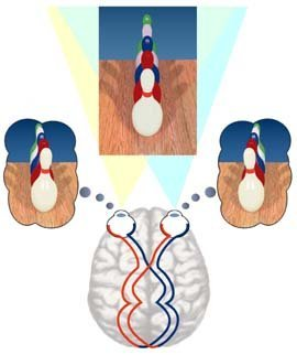 Cerebro imagen