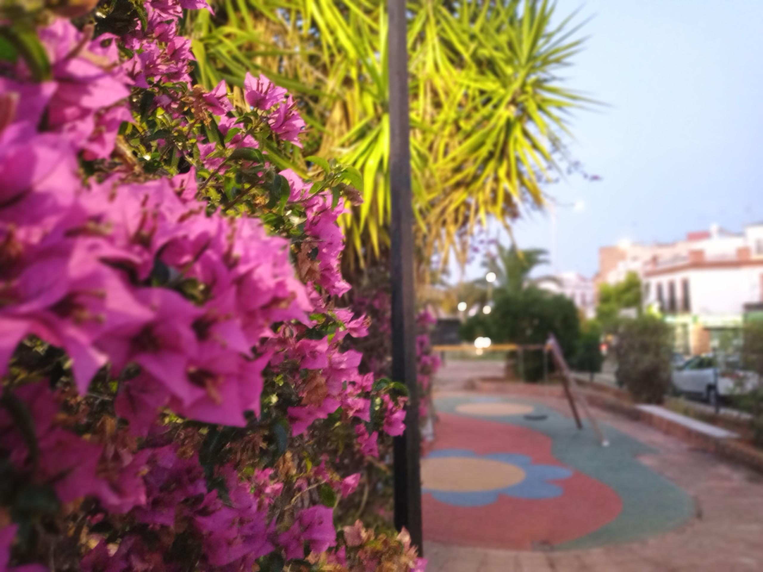Foto de Más fotografías con el Sony Xperia L4 (30/42)