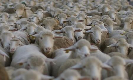 Sigue a las ovejas en la Ruta de la Trashumancia hacia las Tierras Altas de Soria