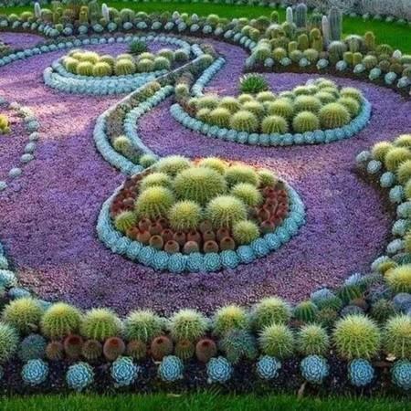 Cactus Cuqui