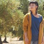'El olivo', no es sólo un árbol