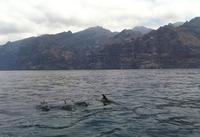Masca, los acantilados de Los Gigantes y avistamiento de cetáceos en Tenerife