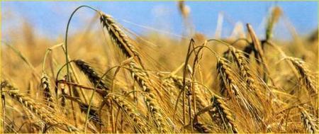 Alimentación complementaria: los cereales