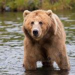 Qué hacer si te topas con un oso en pleno bosque: manual de instrucciones para salir con vida