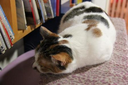 Laika Ac Cat Cafe (7641731716)
